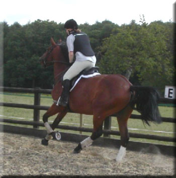 First canter under saddle