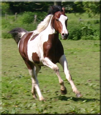 she loves to gallop.....